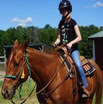 Horse camper