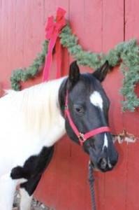 Horse called Gidget
